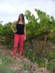 Vine Size Comparison